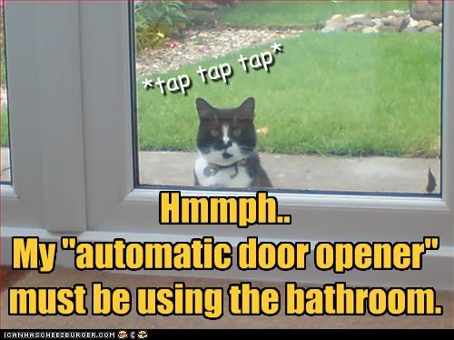 "Hmmph.. My ""automatic door opener"" must be using the bathroom. *tap tap tap*"