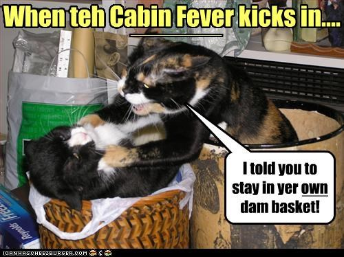 cabin fever Cats fight - 3178212608