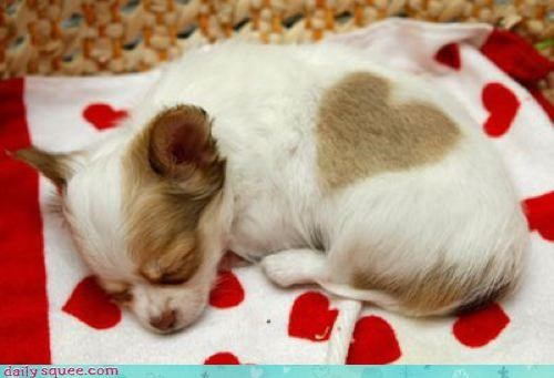 heart,nap,puppy