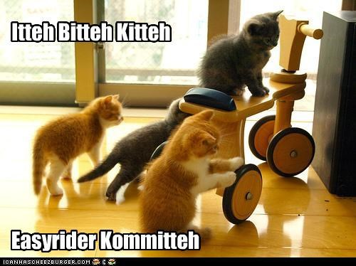 Cats,itteh bitteh kitteh committeh,motorcycle