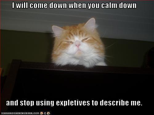 angry avoidance cat shelf - 3178739200