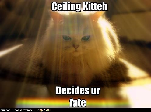 cat ceiling cat kitteh - 3178744576
