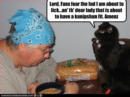 cat,fud,nom,praying