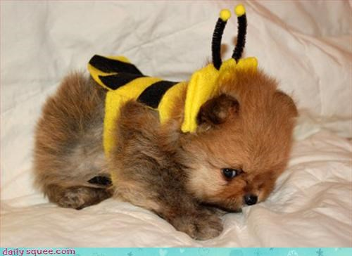 bee,costume,dogs