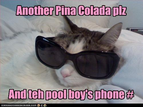 Cats glasses phone number pina colada - 3179031040