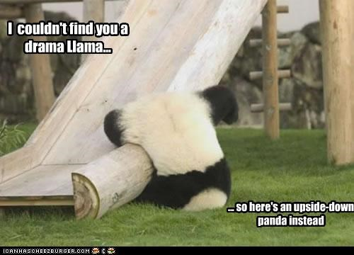 I couldn't find you a drama Llama... ... so here's an upside-down panda instead