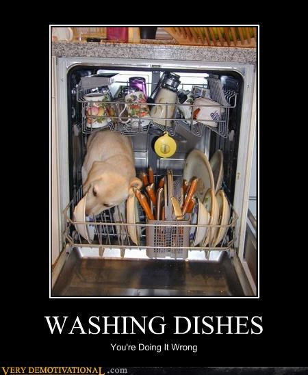 dish washer doing it wrong dogs - 3179363328