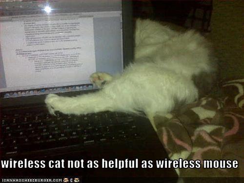 cat computer - 3179562752