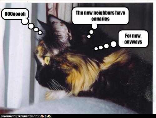 cat eating neighbors plotting - 3179942144