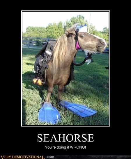 seahorse,pony,wrong