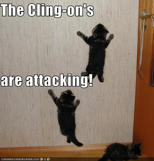 attack climb kitten