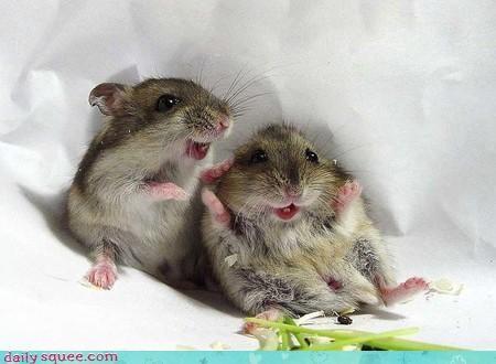 cute face hamsters - 3180924416