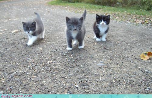 gang kitten - 3181052160