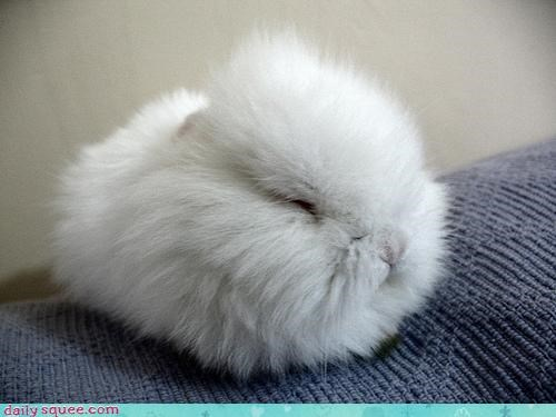 cute Fluffy what is it - 3181433344