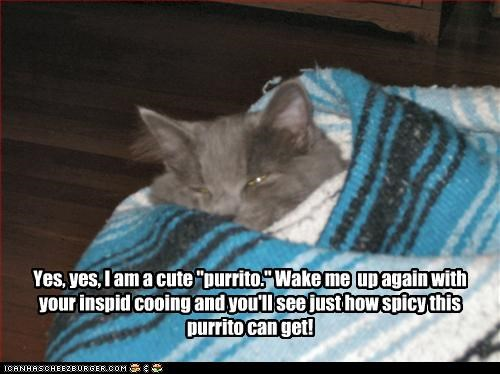 "Yes, yes, I am a cute ""purrito."" Wake me  up again with your inspid cooing and you'll see just how spicy this purrito can get!"