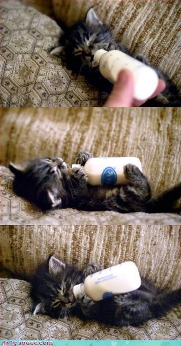 kitten noms ouch - 3181784064