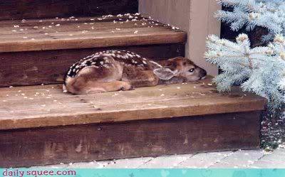 baby,blender,deer