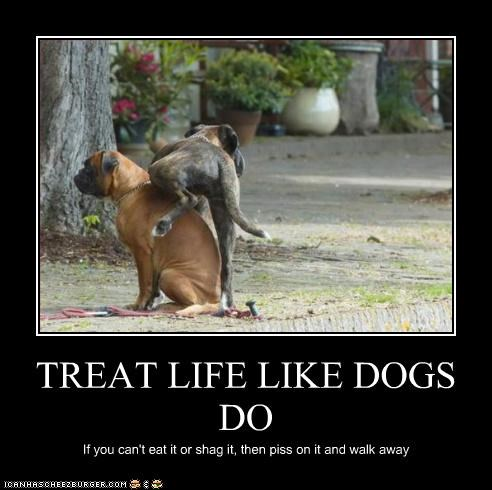 TREAT LIFE LIKE DOGS DO If you can't eat it or shag it, then piss on it and walk away