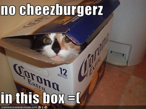 Cheezburger Image 3182109696