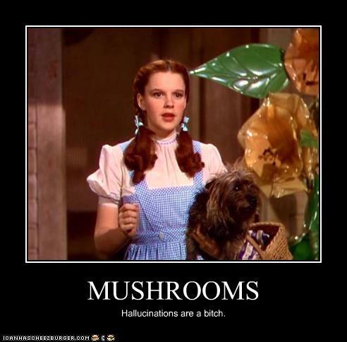 MUSHROOMS Hallucinations are a bitch.