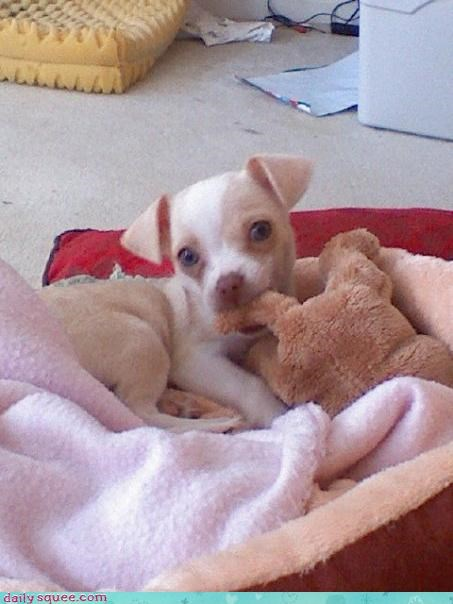 cute noms puppy - 3182862592