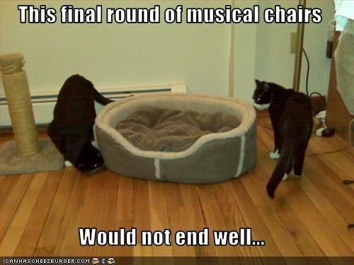 bed Cats circling