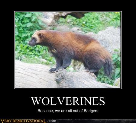 Wolverines animals badgers