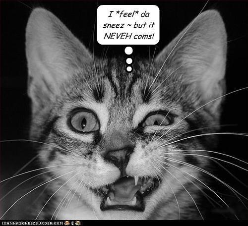 cat sneeze - 3184026368