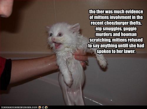 Cheezburger Image 3184051200