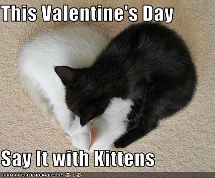 This Valentine S Day Say It With Kittens Cheezburger Funny Memes