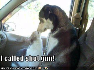 car,lolcats,mixed breed,nose,shotgun,standoff
