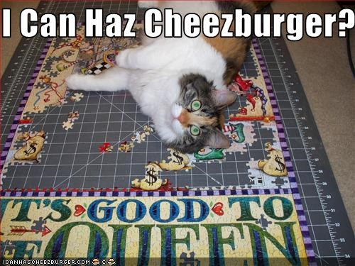 Cheezburger Image 3185709824