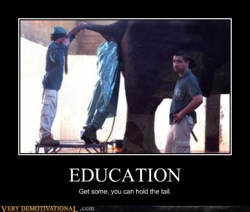 poop,elephant,education