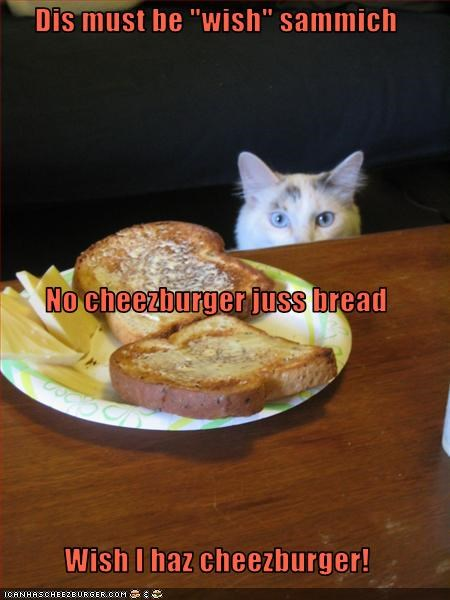 Cheezburger Image 3188076800