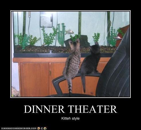 DINNER THEATER Kitteh style
