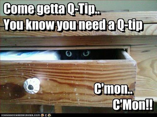 cat scare - 3189508608