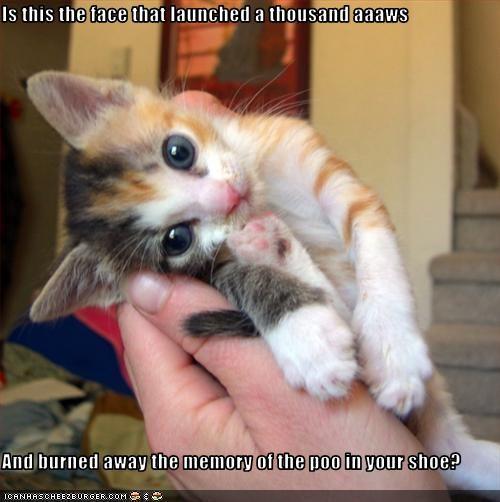 cute face kitten - 3189810432