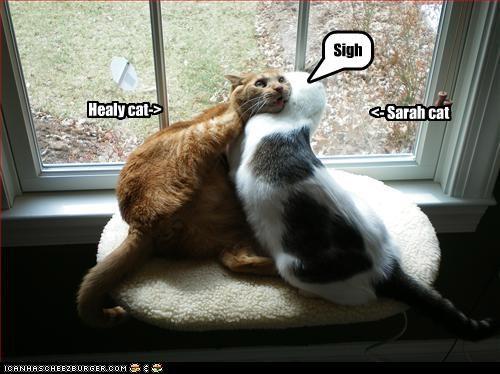 Healy cat-> <- Sarah cat Sigh