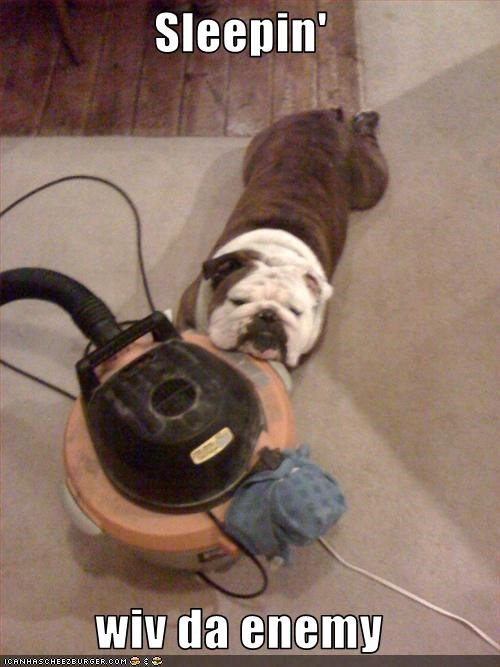 bulldog,enemy,sleeping,vacuum