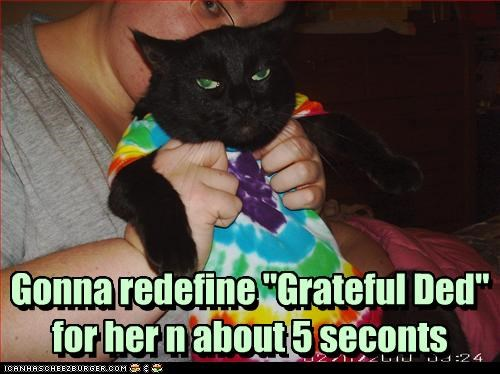 band,cat,grateful dead,Music,tie dye
