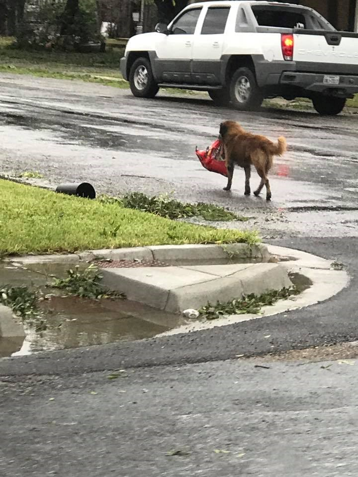 a funny photo of a dog carrying a bag of unopened dog food
