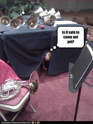 bells french horn hiding labrador Music - 3194461696