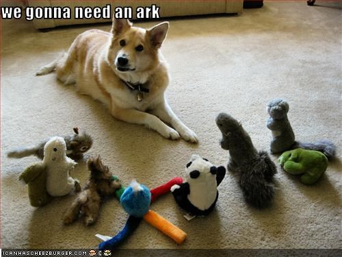 ark,noah,toys,welsh corgi mix