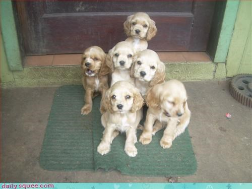 cute dogs puppy - 3194811136