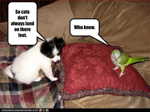 border collie,cockatiel,feet,land,lolbirds,lolcats,puppy