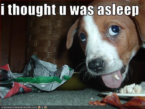 bacon beagle nom - 3196769792
