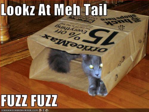 Lookz At Meh Tail  FUZZ FUZZ