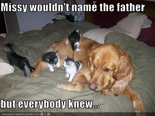 Babies,Father,golden retriever,kitten