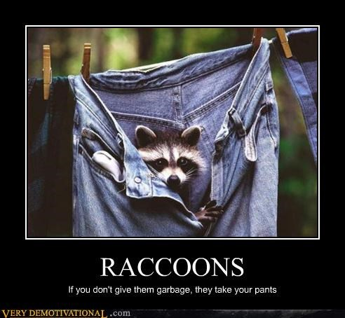 awesome,funny,garbage,hilarious,pants,raccoons,stealing