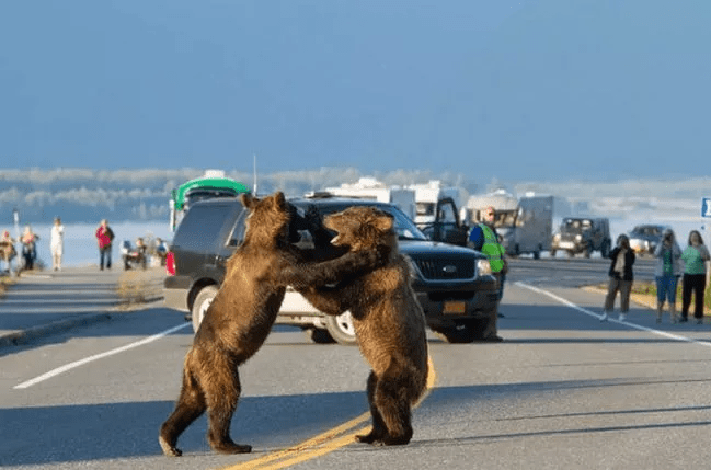 funny traffic gam caused by animals